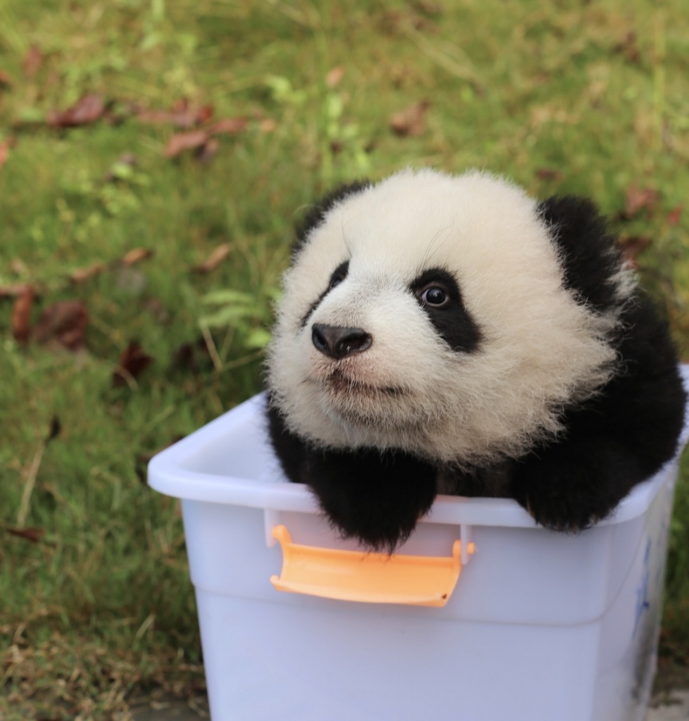 how to get to bifengxia panda research centre